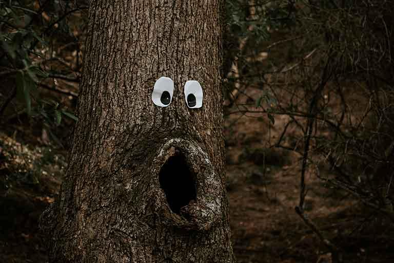 Tree with eyes looking shocked